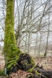Grüner lehnender Baum Lizenzfreies Stockbild