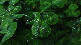 Grüner Liebesregenfokus Stockfotos