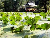 Grüner Lotosteich mit japanischem Schrein Lizenzfreie Stockfotos