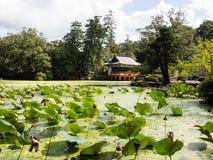 Grüner Lotosteich mit japanischem Schrein Lizenzfreie Stockbilder