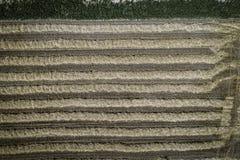 Grüner Mähdrescher, der Weizen auf einem Feld in Österreich erntet Lizenzfreies Stockfoto