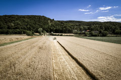 Grüner Mähdrescher, der Weizen auf einem Feld in Österreich erntet Stockbilder