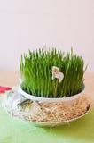 Grüner Mais Stockbild