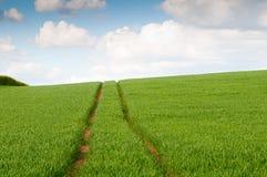 Grüner Mais-Feld Lizenzfreie Stockfotografie