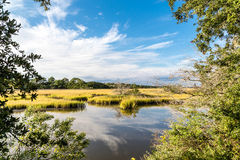 Grüner Marsh Grasses Under Blue Sky Lizenzfreies Stockbild