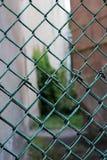 Grüner Maschendraht in der Form des Zauns oder der Hecke stockbild