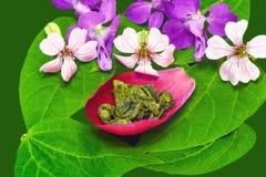 Grüner mit Blumentee Lizenzfreie Stockbilder