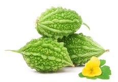 Grüner Momordica drei oder karela lokalisiert auf weißem Hintergrund Lizenzfreies Stockbild