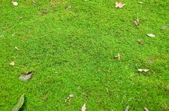Grüner Mooshintergrund lizenzfreie stockbilder