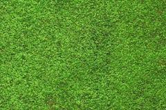 Grüner Mooshintergrund Stockfoto