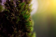 Grüner Mooshintergrund, Baum mit grünem Moos Eine Abbildung einer Batikauslegung in zwei Farbtönen Braun oder des Tan in einer Kr Lizenzfreie Stockbilder