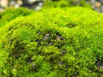 Grüner MOS Stockbild