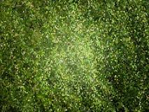 Grüner Mosaik-Hintergrund Lizenzfreie Stockbilder