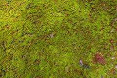 Grüner Moss Seamless Tileable Texture Lizenzfreie Stockbilder