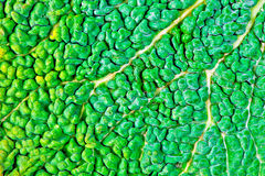 Grüner natürlicher Hintergrund Stockfotografie