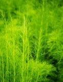 Grüner Natur-Hintergrund Lizenzfreie Stockbilder