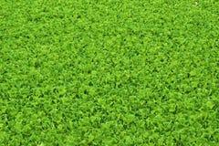 Grüner Naturhintergrund Lizenzfreie Stockfotografie