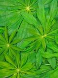 Grüner Naturhintergrund Lizenzfreie Stockfotos