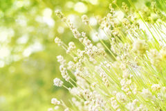 Grüner Naturhintergrund Stockbilder