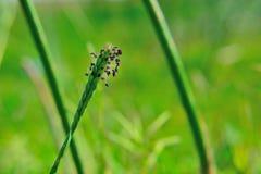 Grüner Naturhintergrund Lizenzfreie Stockbilder