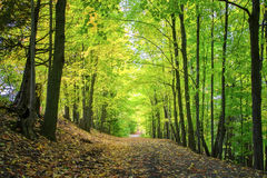 Grüner Naturhintergrund Stockfoto