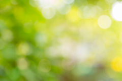 Grüner Naturhintergrund der Unschärfe stockfotografie