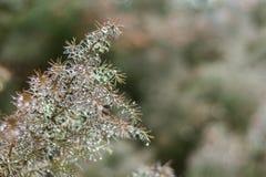 Grüner Naturhintergrundkopieraum mit Koniferenniederlassungsbucht Stockfotos
