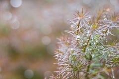 Grüner Naturhintergrundkopieraum mit Koniferenniederlassungsbucht Stockfoto