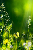 Grüner Naturmit blumenhintergrund des abstrakten Sommers Lizenzfreie Stockfotografie