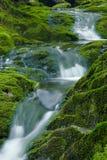 Grüner Nebenfluss Lizenzfreie Stockfotos