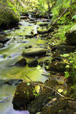 Grüner Nebenfluss im Frühjahr Stockfoto