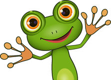Grüner netter Frosch lizenzfreies stockbild