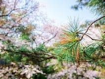 Grüner Niederlassungsbaum der Nahaufnahme mit unscharfem blauem Himmel des Hintergrundes Stockfoto