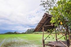 Grüner Paddy archivierte mit Ländern des vorübergehenden Bambuskiosks und des blauen Himmels Stockbild