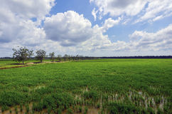 Grüner Paddy archivierte mit Landschaft des Baums und des blauen Himmels in Malaysia Stockbild
