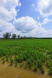 Grüner Paddy archivierte mit Landschaft des Baums und des blauen Himmels in Malaysia Stockfotografie