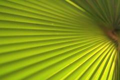 Grüner Palmblattabschluß oben lizenzfreie stockbilder