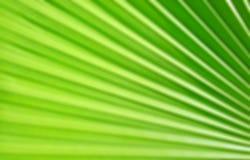 Grüner Palmblattmusterhintergrund Stockbilder