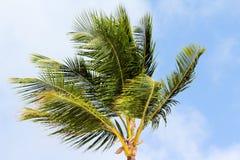 Grüner Palmenstoff auf Hintergrund des blauen Himmels Sommer Lizenzfreie Stockbilder