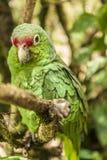 Grüner Papagei, der auf einem Baumast sitzt lizenzfreie stockbilder