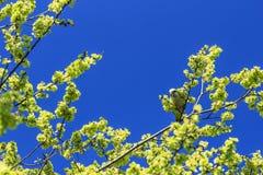 Grüner Papagei im Baum lizenzfreie stockbilder