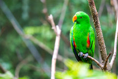 Grüner Papagei im Baum lizenzfreies stockbild