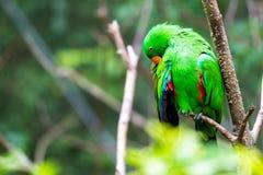 Grüner Papagei im Baum Stockbild
