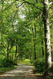 Grüner Park in Berlin, Deutschland Lizenzfreies Stockbild