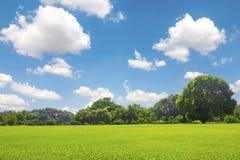 Grüner Park im Freien mit Wolke des blauen Himmels lizenzfreies stockfoto