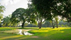 Grüner Park mit Bäumen Stockbilder