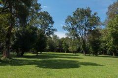 Grüner Park mit blauem Himmel Stockbild