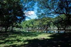 Grüner Park mit See und Reflexion stockbilder