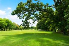 Grüner Park und Baum mit blauem Himmel Stockbilder