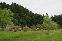 Grüner Park von furnas Sao Miguel, die Azoren-Inseln, Portugal lizenzfreies stockfoto